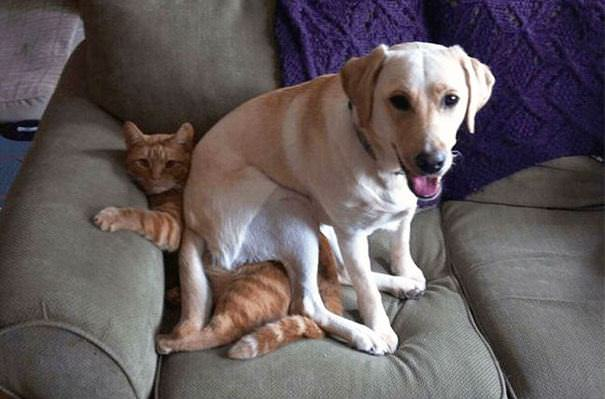 Perros Traviesos y Malvados