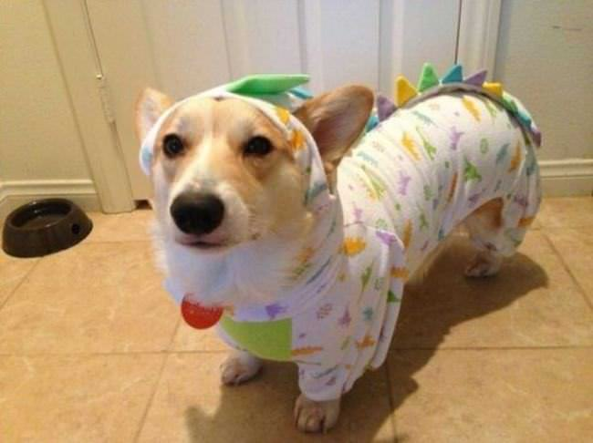 Perros en Pijama