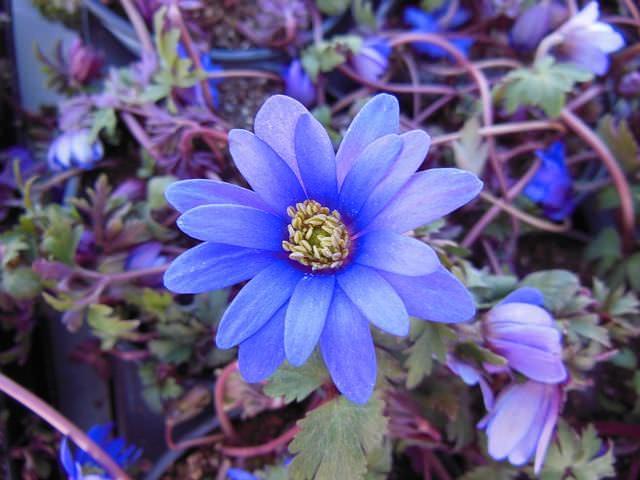 Flores sombra