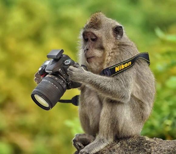 Animales Fotógrafos