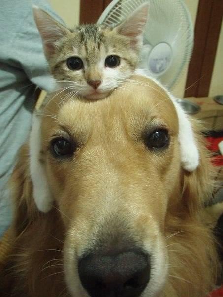 Dia de Perros