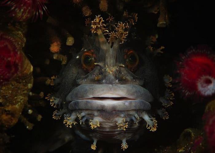 Animales Oceánicos