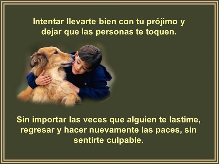 Lecciones caninas