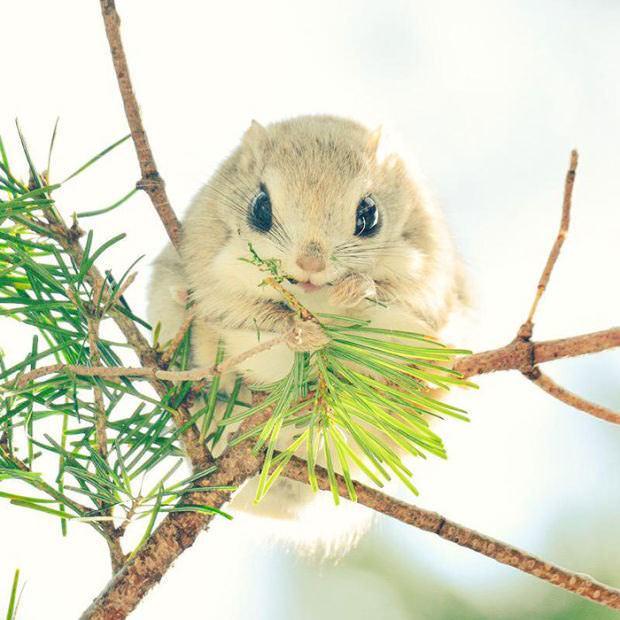 Animales de Isla de Japón