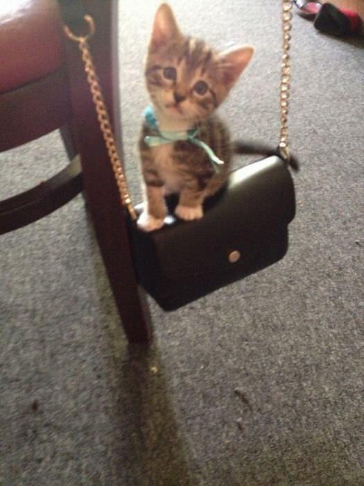 Día De Gatos