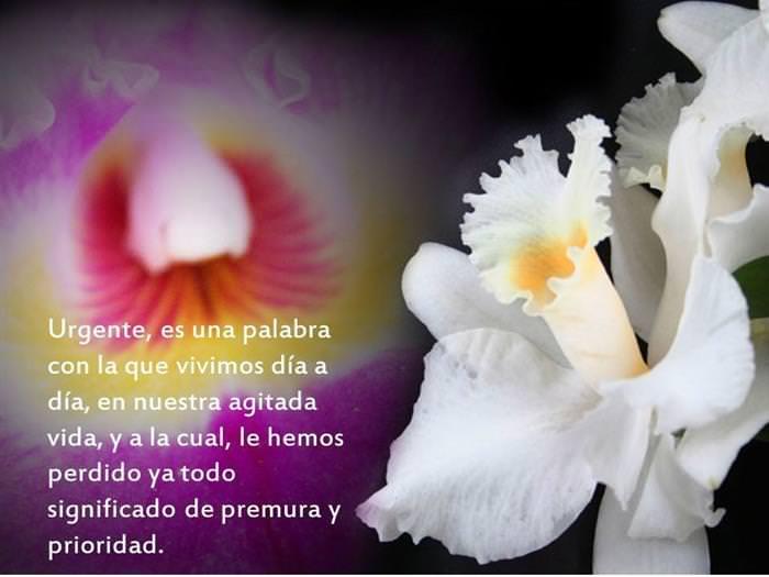 Flores y Reflexiones