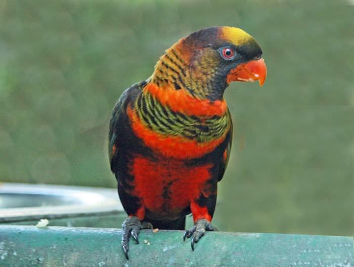 Aves de colores