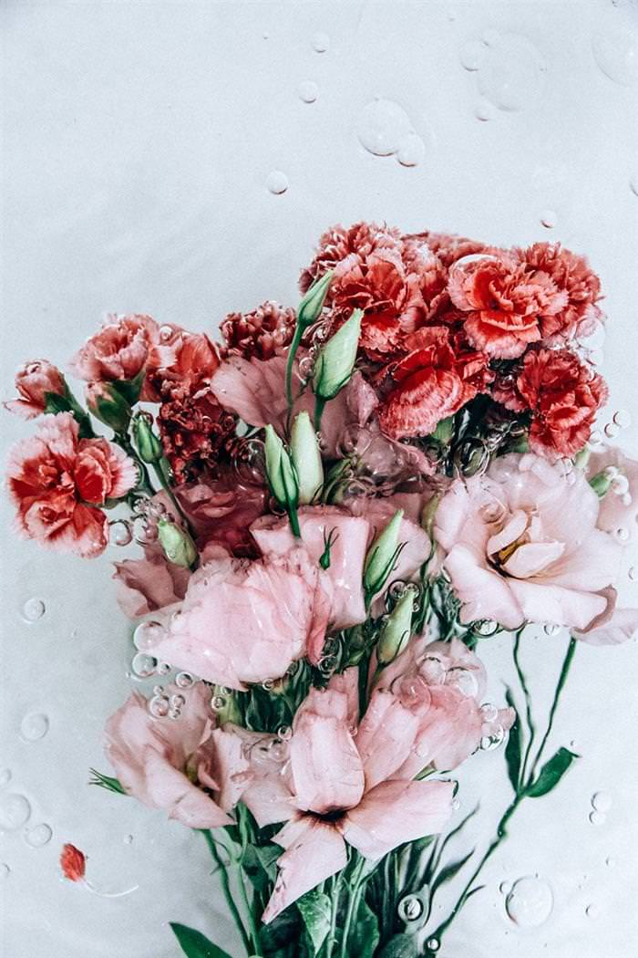 Flores Bajo Agua