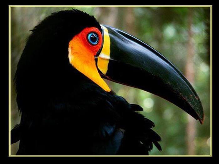 Aves y Citas