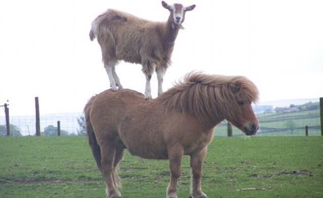 Animales Perezosos