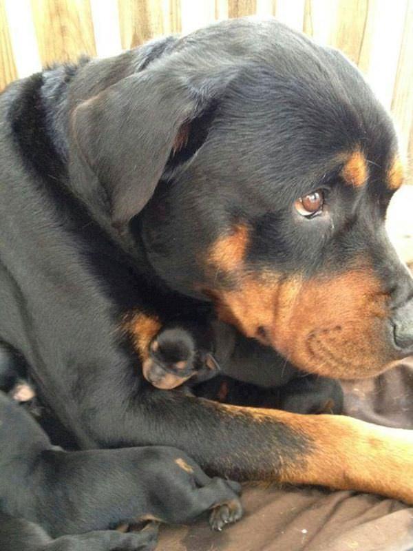 Cachorros y madres
