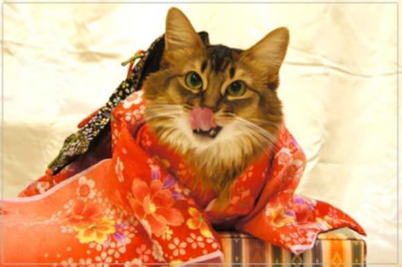 Gatos Kimonos
