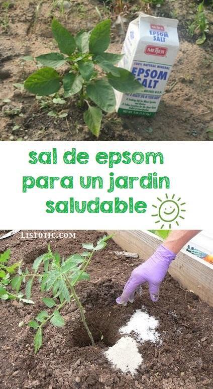 Tips jardín