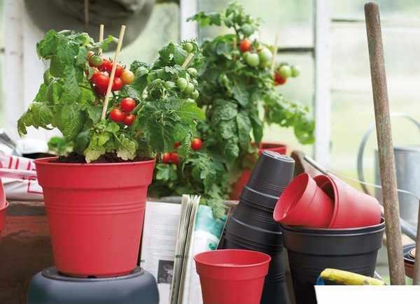 Cultiva Frutas y Verduras