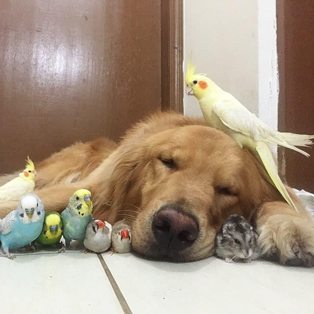 Tierna familia