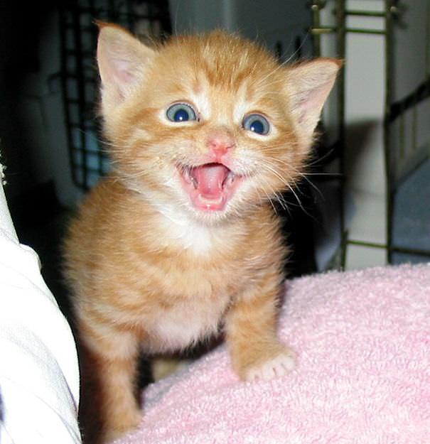 Gatos Sonrientes