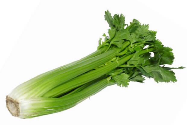 Vegetales cultivo