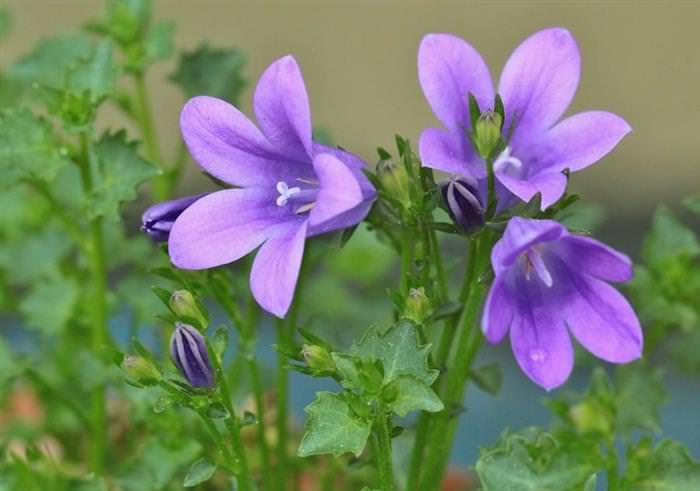 Flores Verano