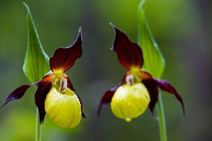 Flores Más Exóticas