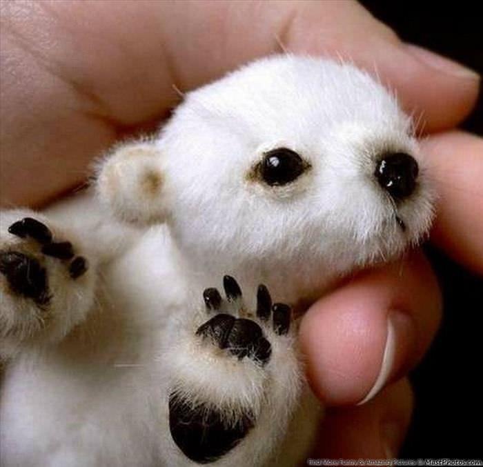 Bebés animales