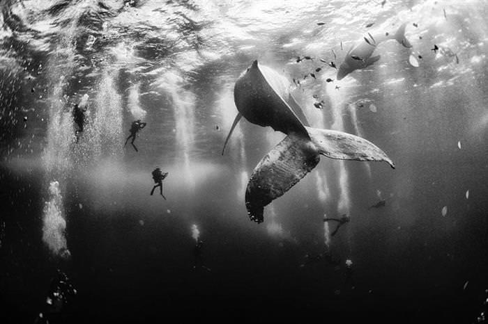 Concurso De Fotos NG