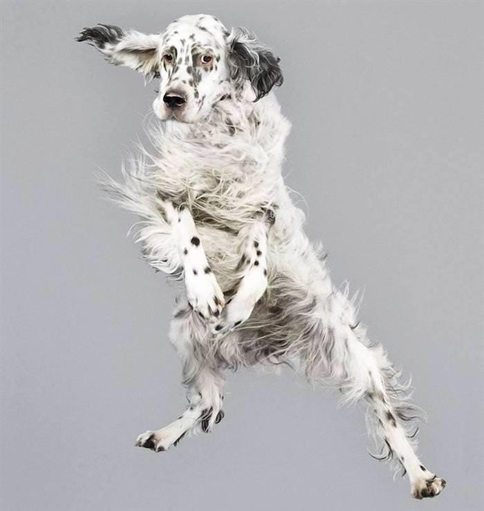 Perros Voladores