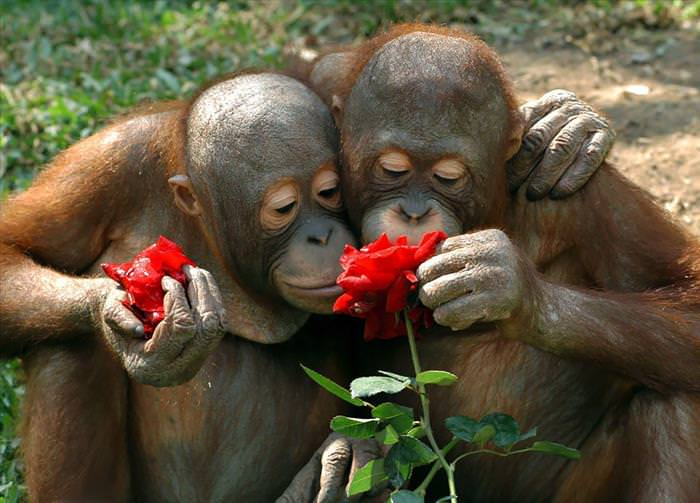 animales disfrutando de las flores