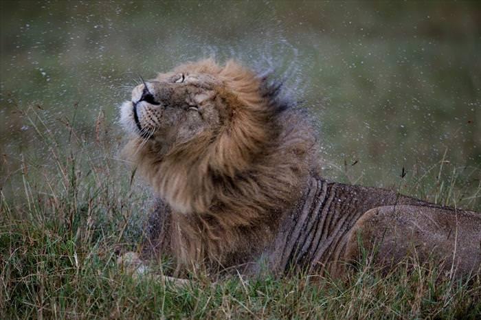 Hermosas Fotografías Del Invierno En El Reino Animal