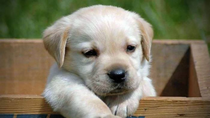Estos Cachorritos Derretirán Tu Corazón Con Su Presencia