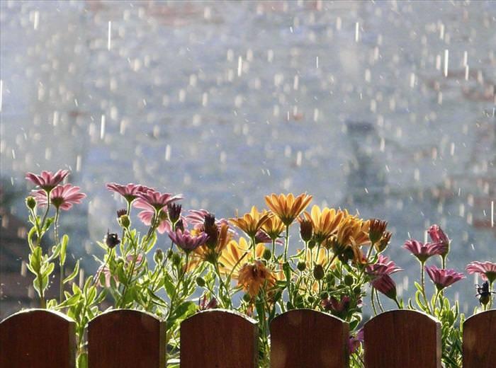 Después De La Lluvia, Las Flores Viven...