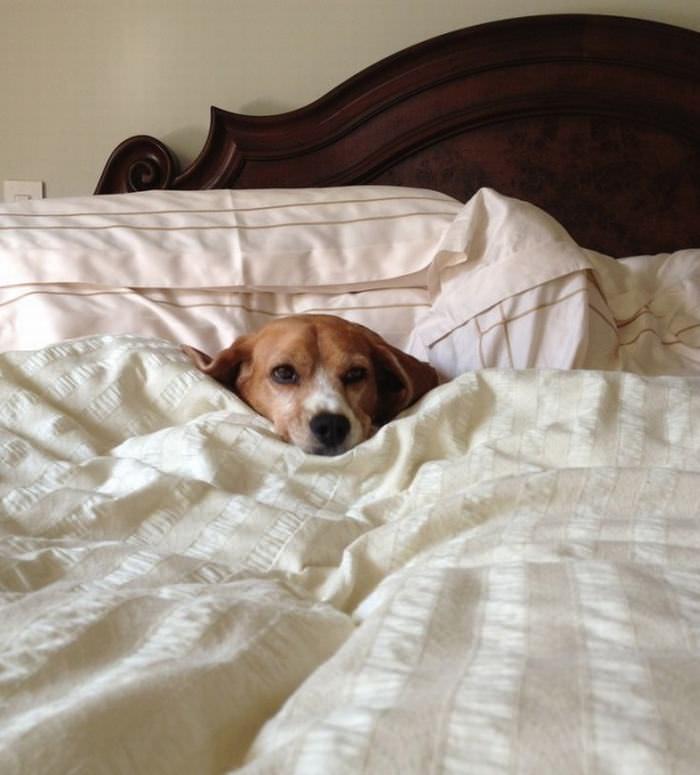 Las Horas De Sueño Son Las Preferidas Por Estos Perros