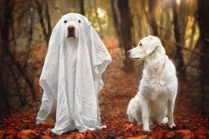 perros mejores amigos