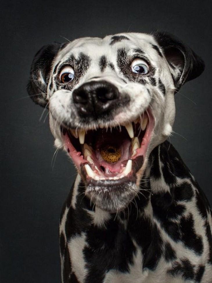 caras divertidas perros comida