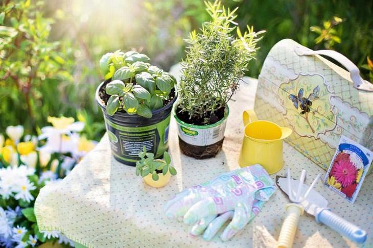 11 errores jardinería