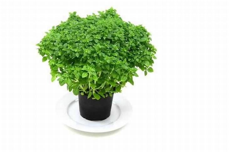 beneficios salud hierbas