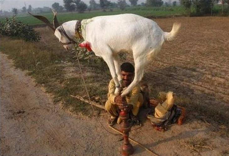 cosas que solo puedes ver en la India