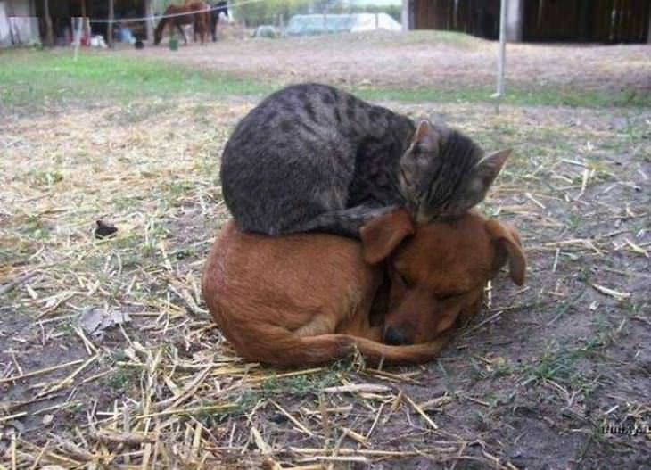 perros durmiendo sobre gatos