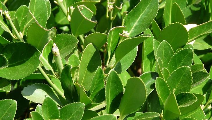 plantas para mejorar circulación aire