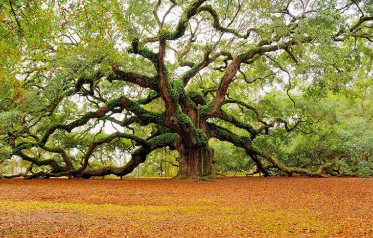 espectaculares árboles