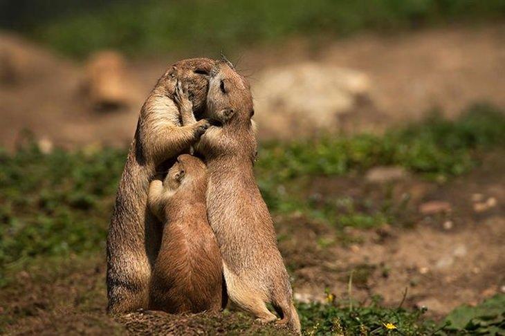 envia besos de amor y afecto