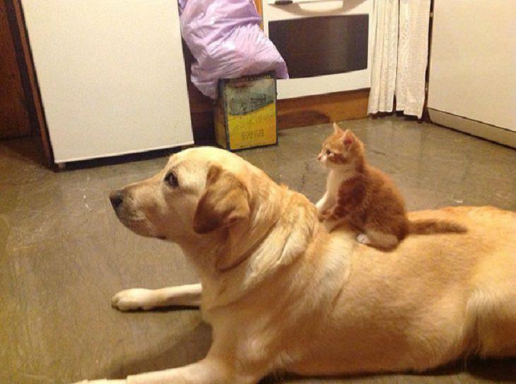 20 lindas fotos de perros y gatos