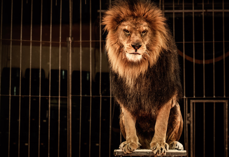 chiste: domador de leones