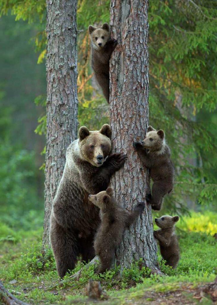 fotografias animales familia
