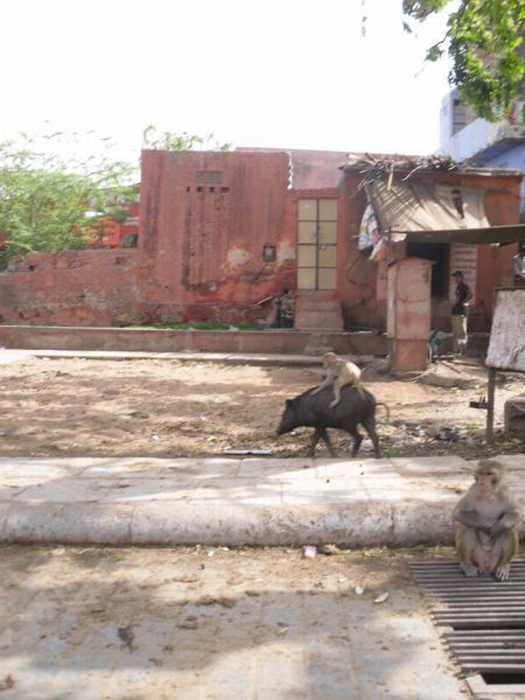 cosas que solo se ven en la India