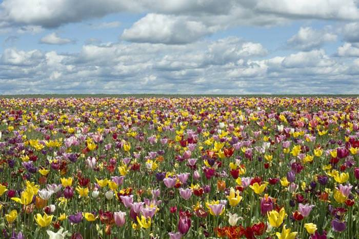 lugares para visitar en primavera