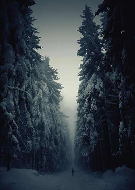 fotos naturaleza