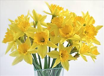 flores que no son para ti