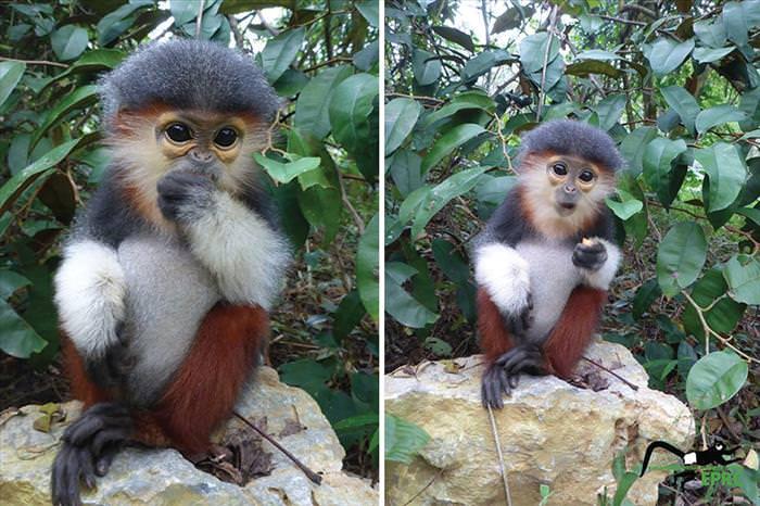 Estos Primates No Están Vencidos Aún
