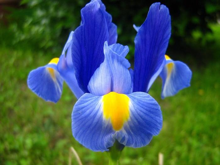 flores y palabras