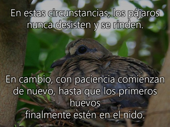 Deberíamos Aprender Esta Lección De Vida De Los Pájaros